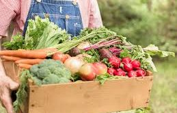 Free Business listing directory for Buyer of Agricultural Products